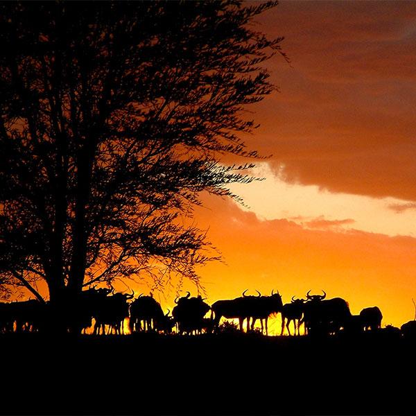 destinazioni-kenya