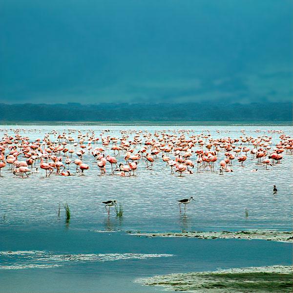 destinazioni-tanzania