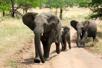 elefante 01