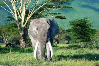 elefante 03