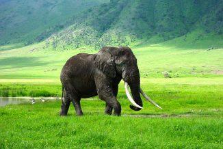 elefante 04