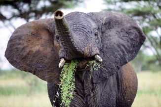 elefante 06