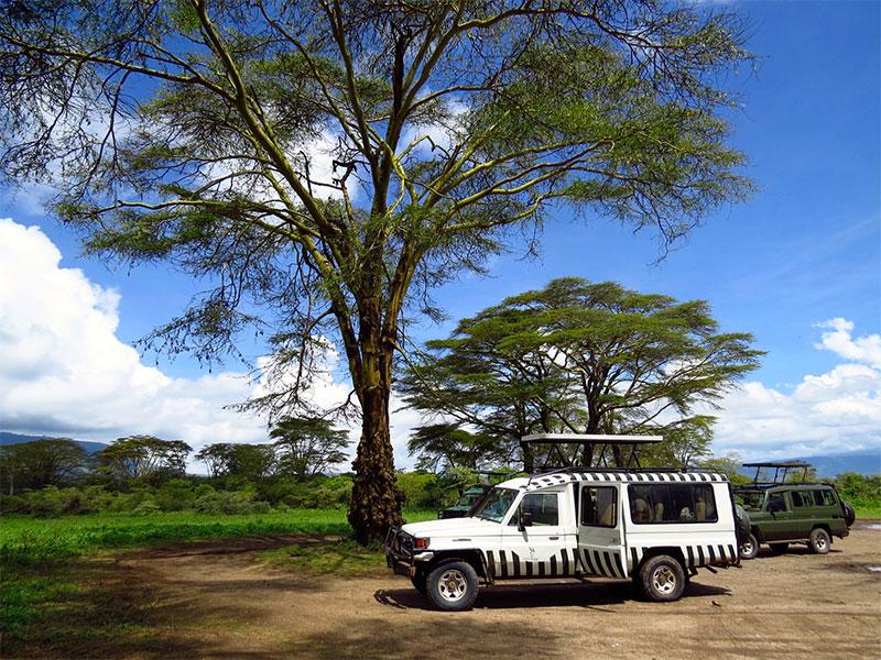 home-safari