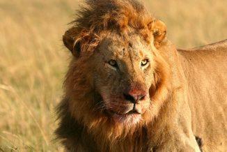 leone 01