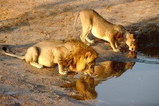 leone 10