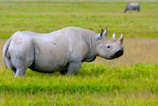 rinoceronte 3