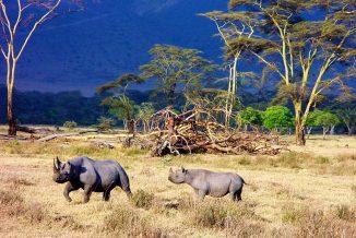 rinoceronte 8